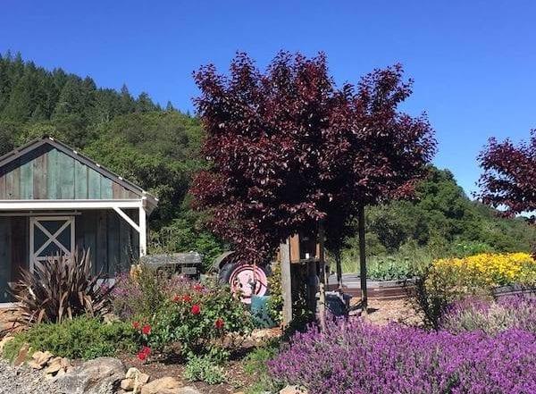 00 Mountain House Estate – San Francisco Bay area rustic wedding venue – Sonoma wine country weddings