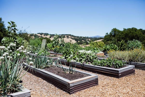 rustic Sonoma wedding venue - raised garden beds - San Francisco Bay Area rustic wedding venue -  Alexander valley rolling hills