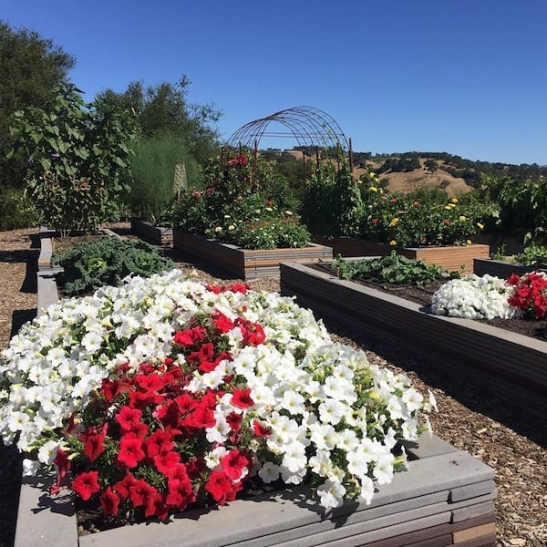 raised garden beds- Mountain house estate - Sonoma wine country wedding venue- rustic California wedding venue