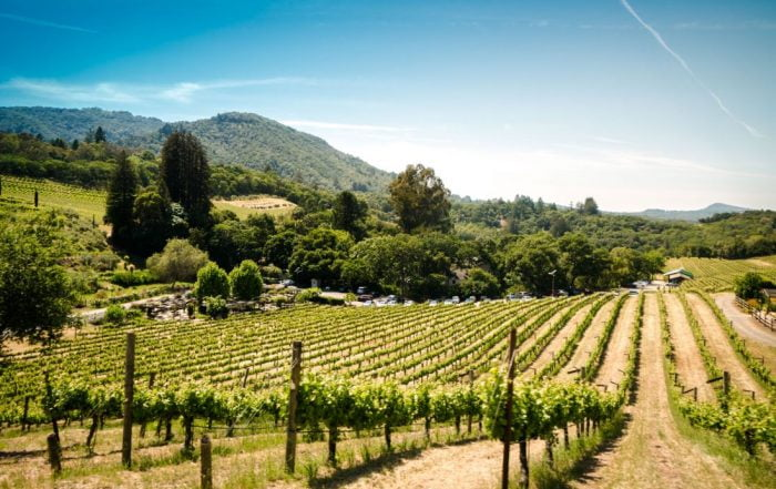 Vineyard Tours and Wineries near Mountain House Estate